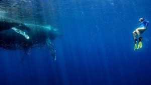 Freediving Photograph with Whale