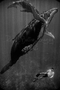Diver with whale