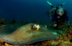 Scuba Diving with Stingray