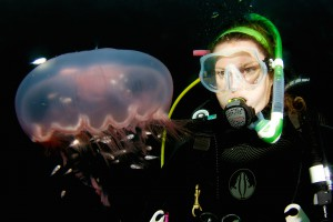 Moon Jelly and Scuba Diver