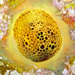 Yellow Coral Reef Profession Photography