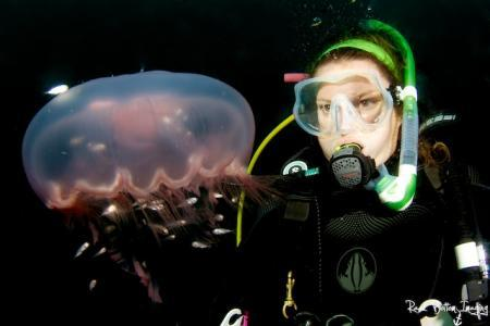 Diver with Moon Jelly - Marine Education